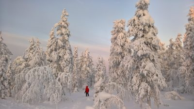John Burcham wanders through knee deep snow in the frozen forest above Levi, Finland.