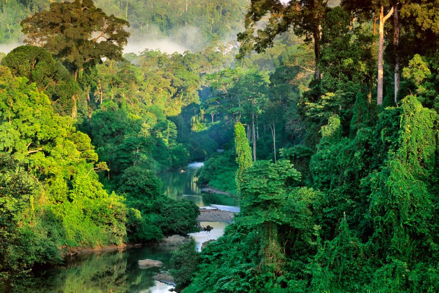 River in lowland rainforest, Sabah, Borneo