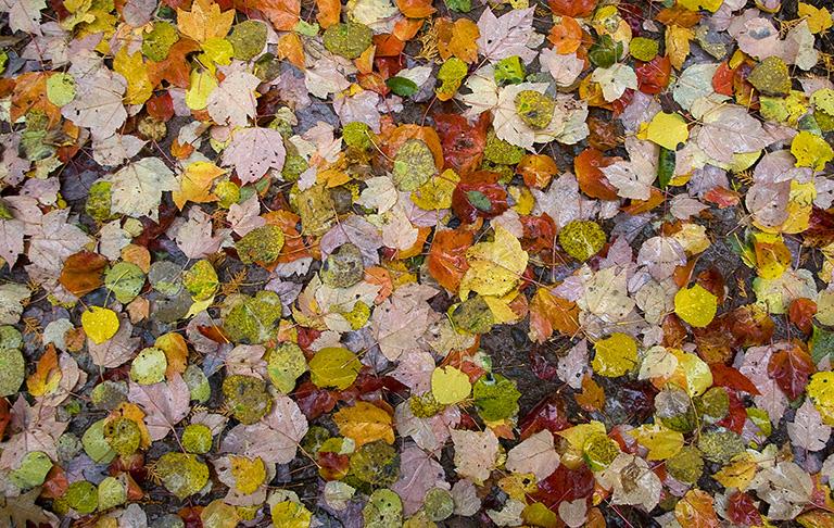 Fall Color Madeline Island, Lake Superior